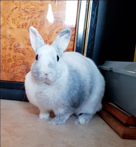 Que ne perçoivent pas les lapins ?