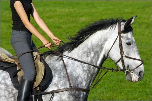 Pour conduire avec précision un cheval, il faut...