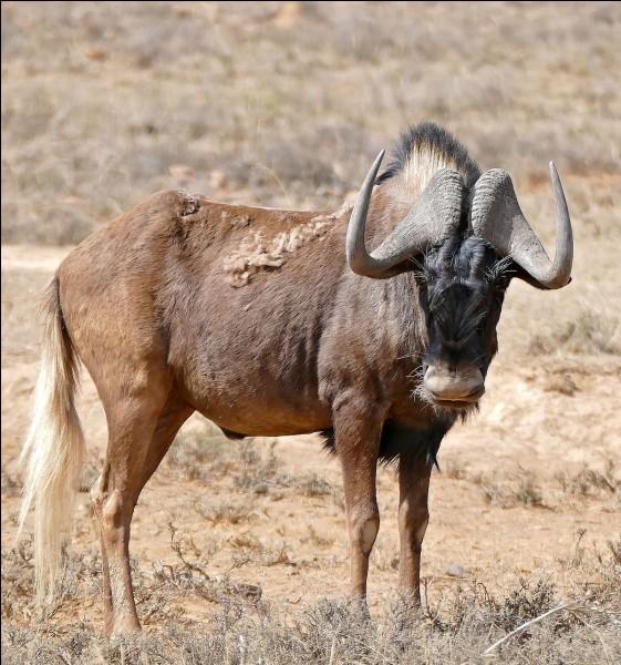 Où vit cet animal (en considérant toutes les espèces) ?