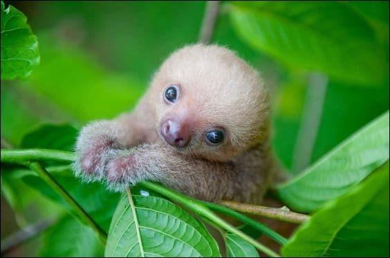Comment s'appelle ce bébé ?