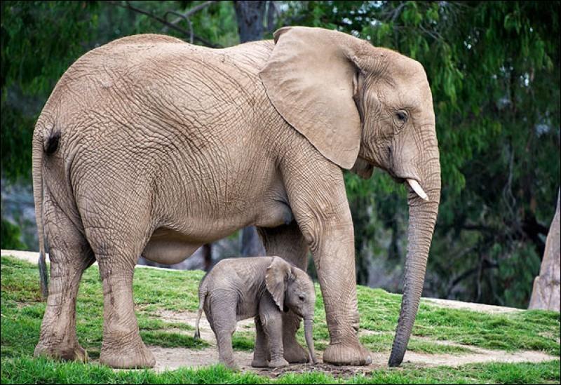 Comment s'appelle ce bébé animal ?