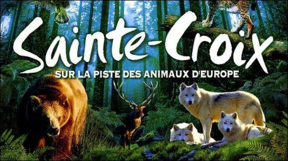 Ensuite nous ferons un petit tour au Parc animalier de Sainte-Croix, principalement spécialisé dans la faune européenne !