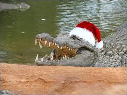A voir, la Ferme aux Crocodiles !