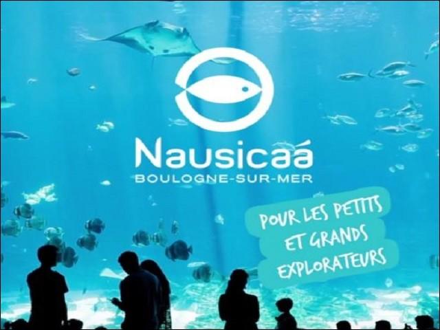 Et pour finir, un magnifique spectacle à Home-Nausicaa !