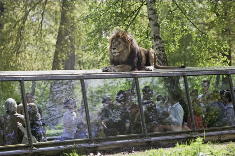 Je sens que vous allez m'accompagner au ZooSafari !