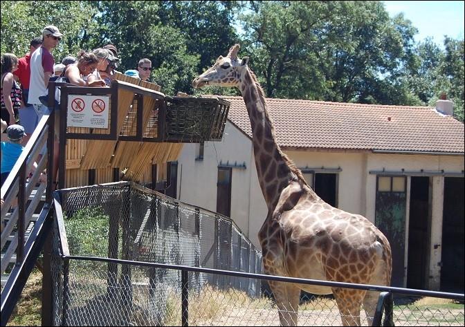 Puisque vous n'avez pas l'air de savoir ce que vous voulez, tentez le Safari de Peaugres !