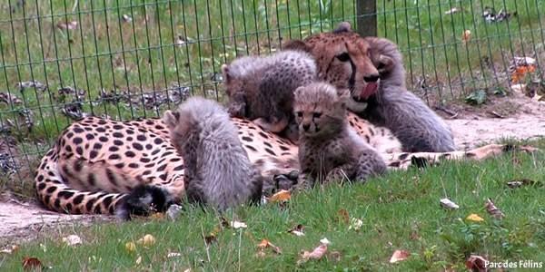 Parcs et zoos de France