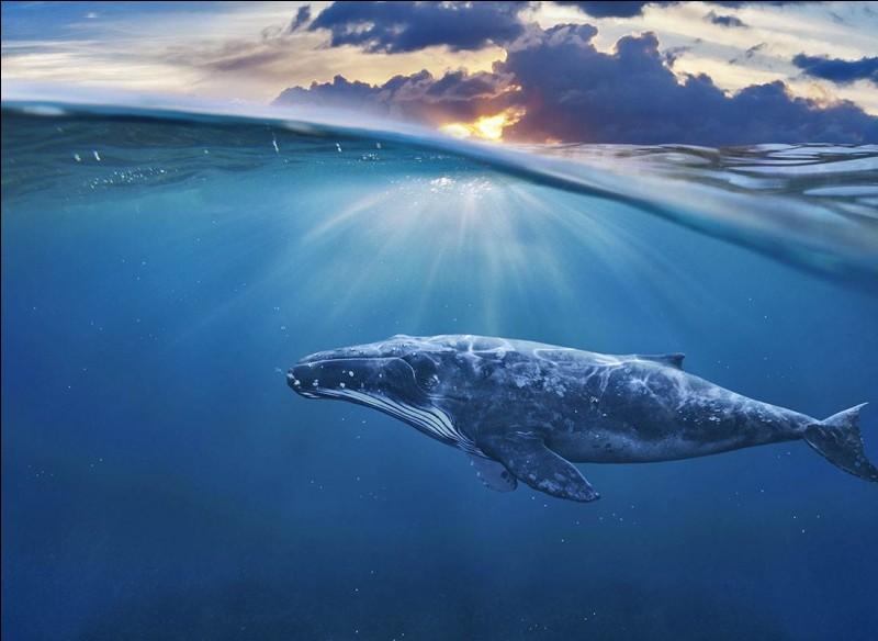 Le poids de la baleine est constitué de 50-70% de ...