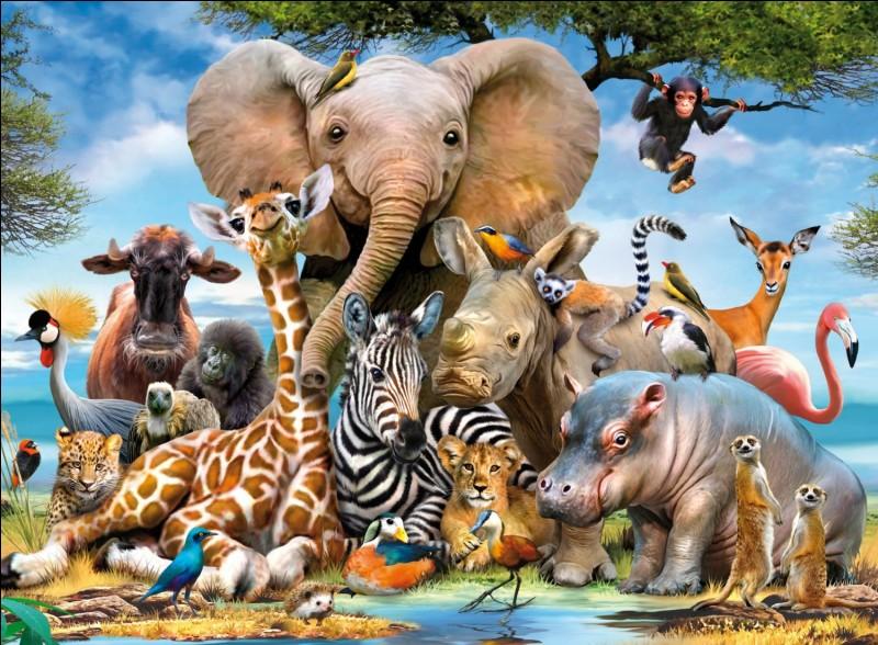Quel est l'animal le plus menacé parmi tous ceux-là ?