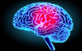Et dans notre cerveau, où sont-elles stockées ?