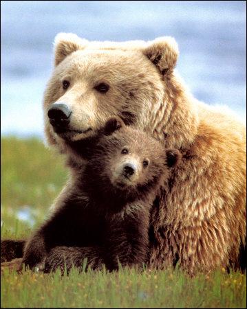 Lequel de ces animaux ne trouve-t-on pas en Alaska ?