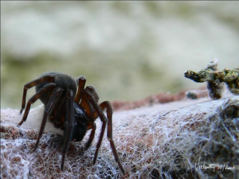 Comment appelle-ton une personne qui a la phobie des araignées ?