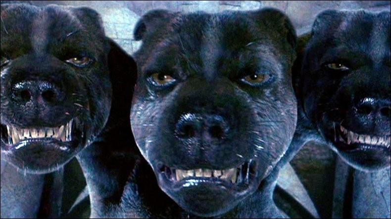 Comment s'appelle le chien à 3 têtes ?