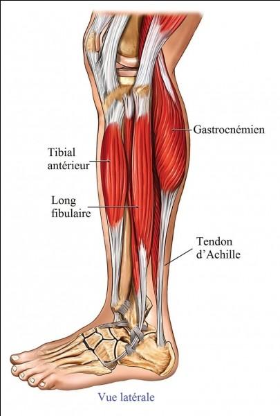 Combien sollicite-on de muscles pour marcher ?