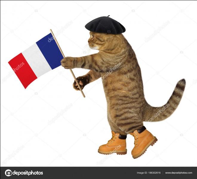 Combien de races de chats sont reconnues en France ?