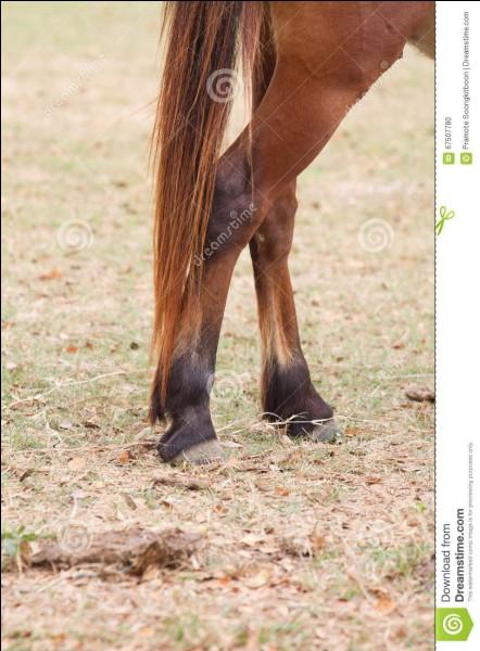 Comment désigne-t-on les jambes du cheval ?
