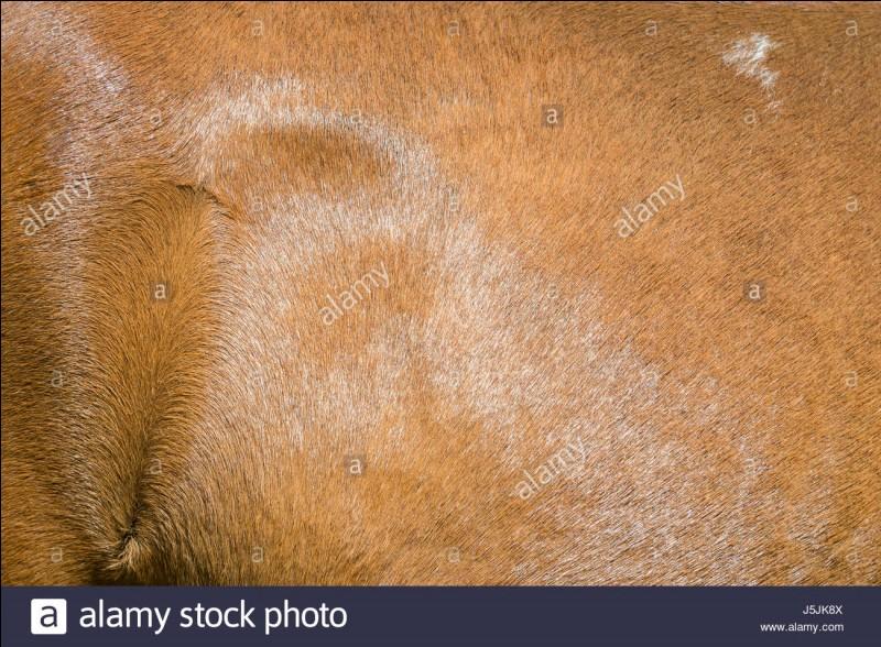 Quels peuvent être les animaux qui correspondent à l'image ?