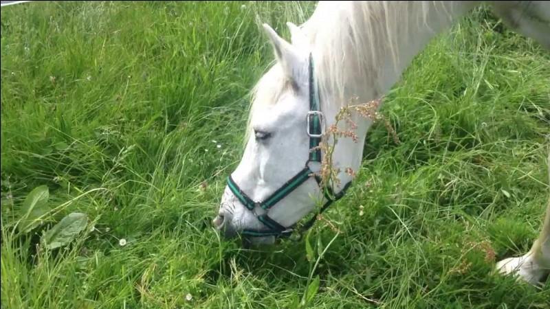 À l'état naturel, les chevaux passent :