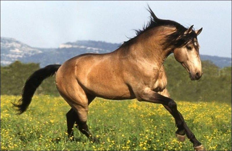 Robes des chevaux