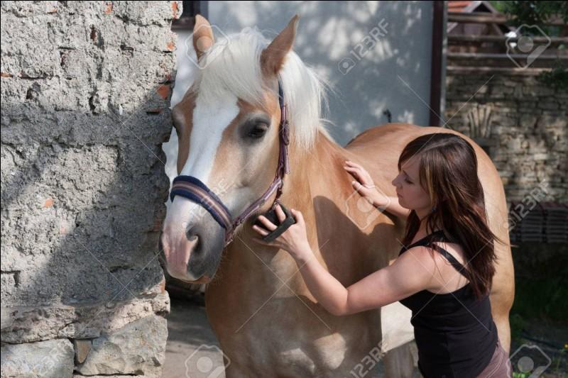 On doit régulièrement faire la toilette du cheval. Comment appelle-t-on cela ?