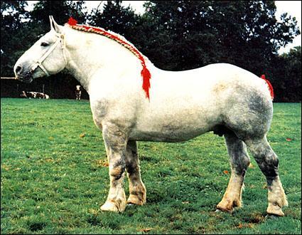 Quel est le cheval que l'on employait autrefois pour labourer ?