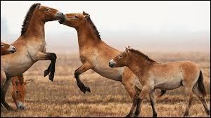 Que font ces chevaux ?