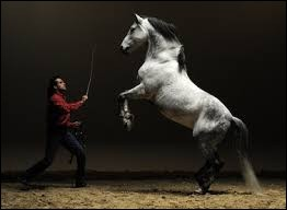 Pourquoi ce cheval se cabre ?