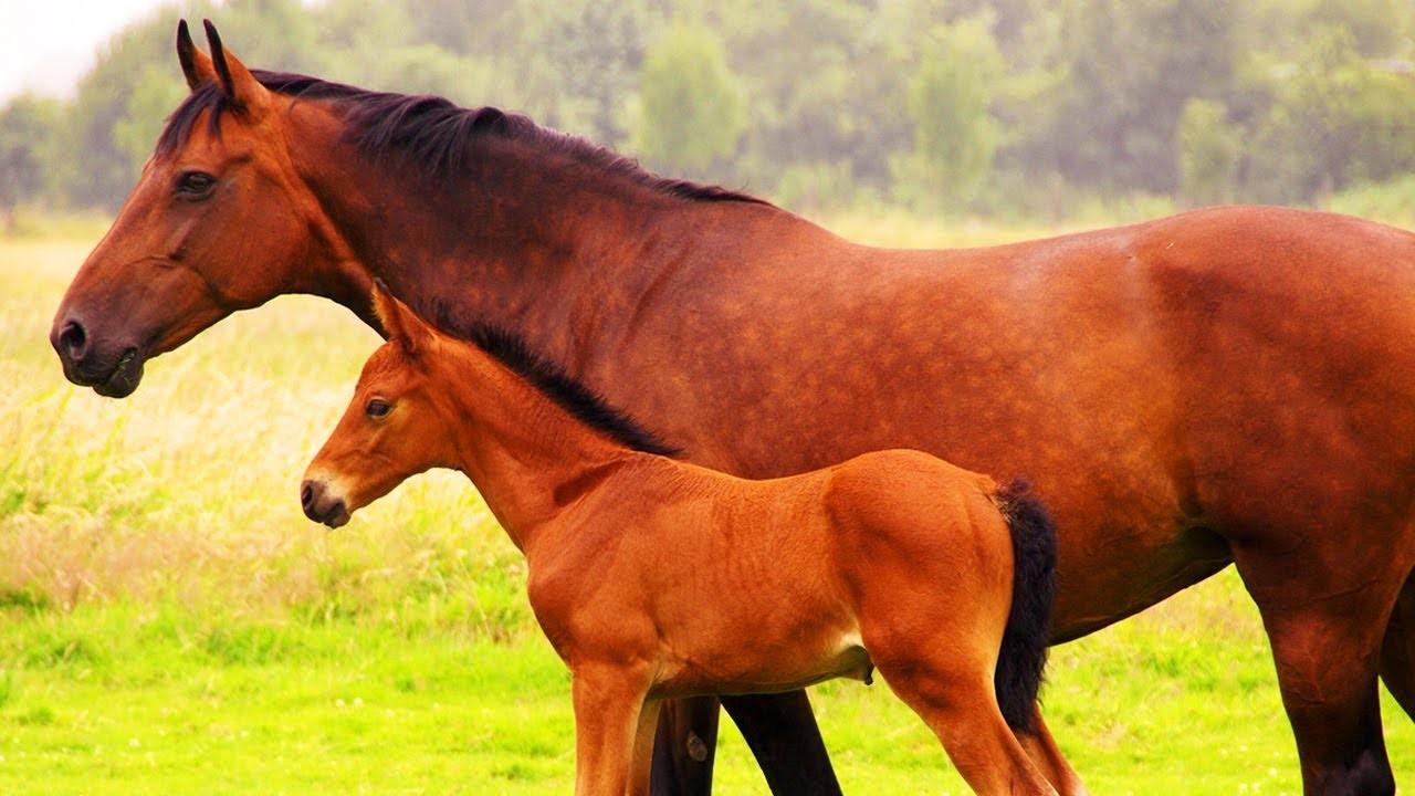 Vrai ou faux sur les chevaux