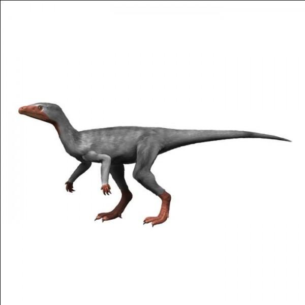 Eoraptor était un des premiers dinosaures.