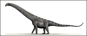 L'Argentinausaurus était le plus grand des dinosaures