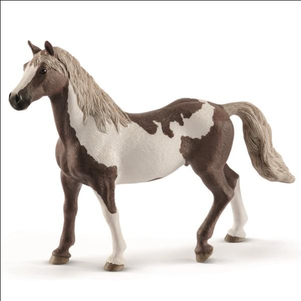 Quel est le genre de ce cheval ?