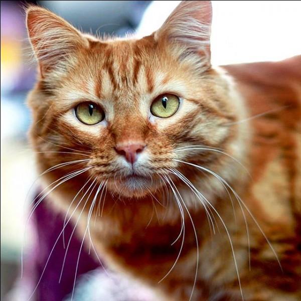 Comment s'appelle son chat ? (photo)