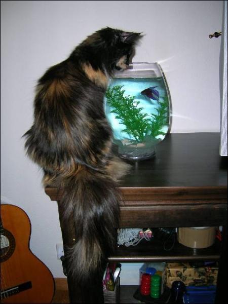 Ce chat est un…