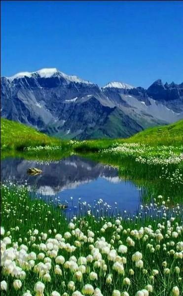 """Jean Ferrat, lui, préférait sa montagne qu'il décrivait si bien dans sa chanson dont vous allez compléter les paroles : """"Mais ils savaient tous à propos tuer ......... et manger la tomme de chèvre"""" :"""