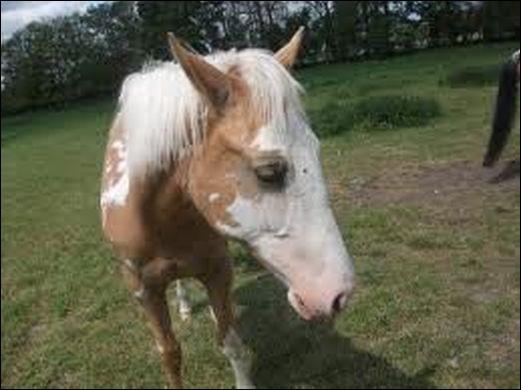Ce cheval a. ..