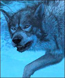 Qui est ce Loup ?