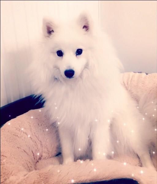 Comment s'appelle son chien blanc ?