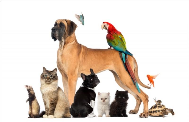 As-tu des animaux ?