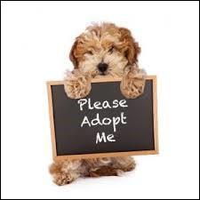 """Que donne le verbe """"adopter"""" à la troisième personne du singulier au conditionnel passé ?"""