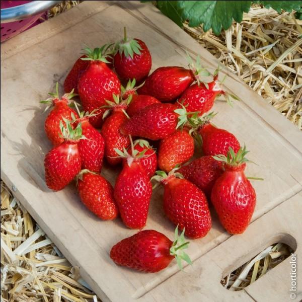 Fruit d'été et de nos régions, quel est son nom ?