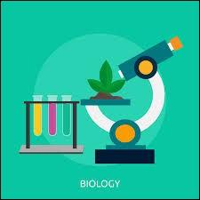 Quelle sorte de plante a un système interne structuré par des tubes ?