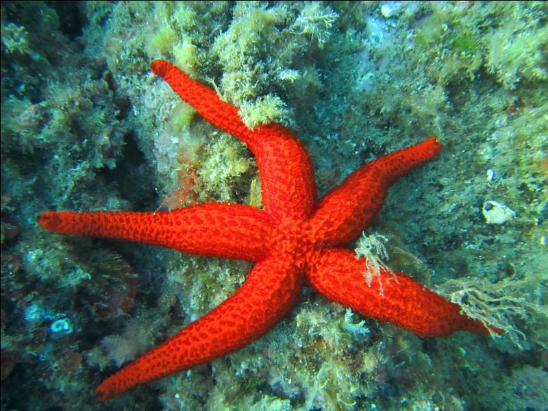 Quel processus l'étoile de mer utilise-t-elle pour faire pousser un nouvel organisme lorsqu'elle est découpée en morceaux ?