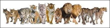Choisissez le bon animal !