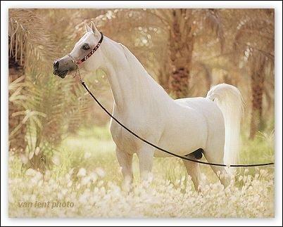 Pour le cheval ?