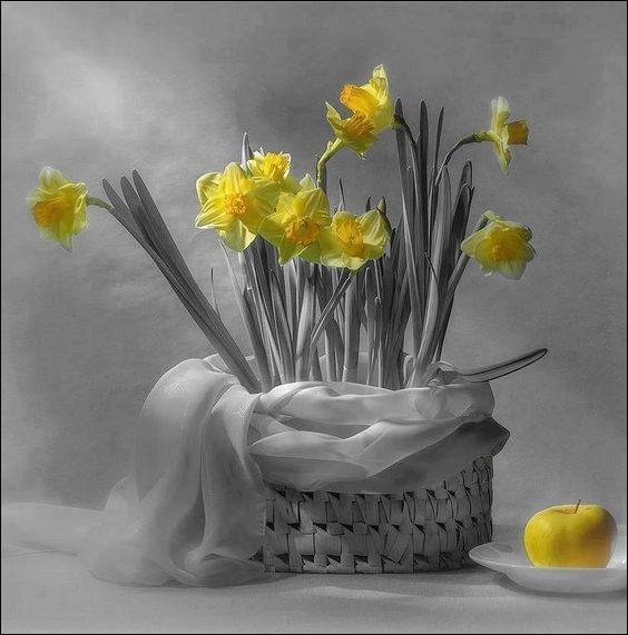 """Où se tient, tous les deux ans, la traditionnelle """"Fête des jonquilles"""", au mois d'avril ?"""