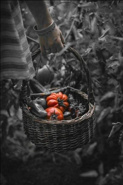 Comment se nomment les grosses tomates plissées ?
