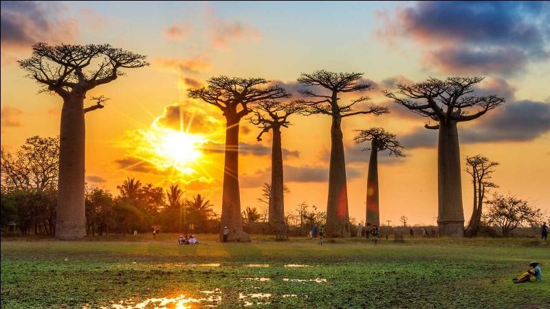 Quel est le nom de Madagascar dans sa langue nationale ?