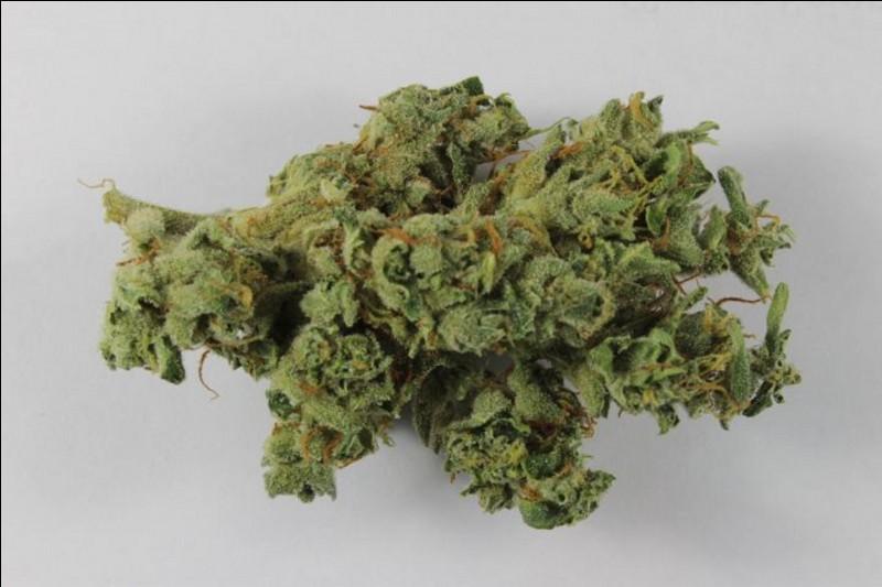 En verlan quel est le terme approprié pour désigner de l'herbe (cannabis sous forme de fleurs sèches) ?