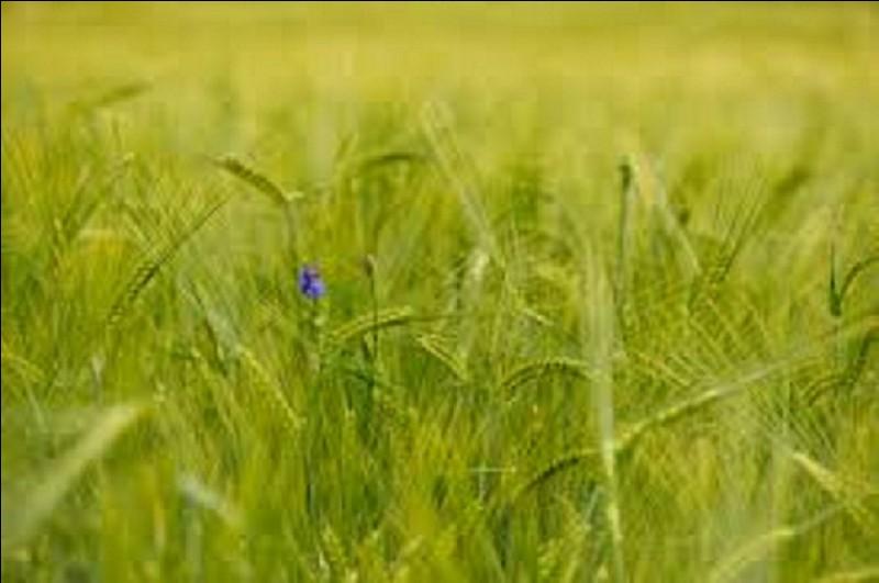 """Qui est l'auteur du roman """"Le Blé en herbe"""" ?"""