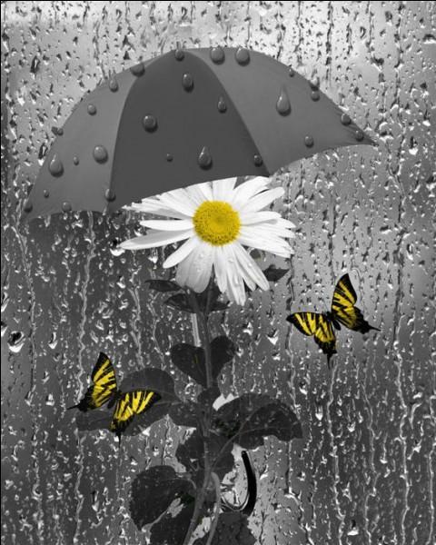 """À quel poète doit-on les vers : """"Il pleure dans mon cœur comme il pleut sur la ville"""" ?"""